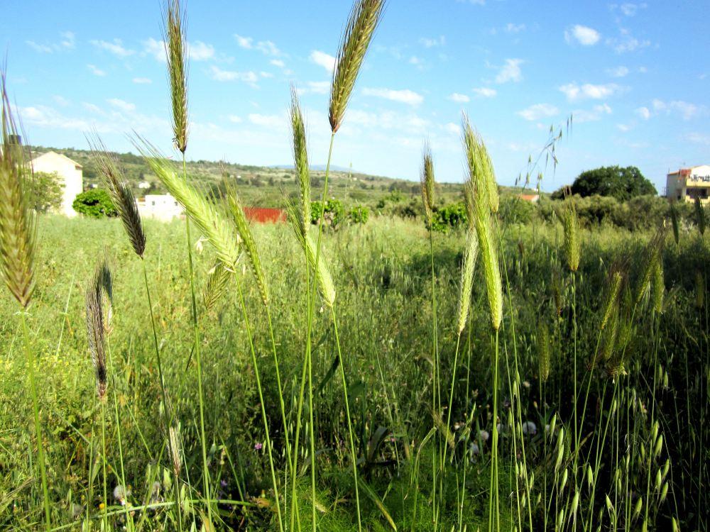 A field in Germany
