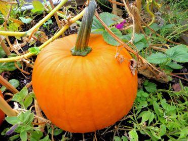 The Most Sincere Pumpkin Patch