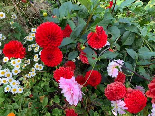 Emily Carr's Garden, Emily Carr House, Victoria B.C.
